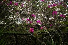 Philia Flowers